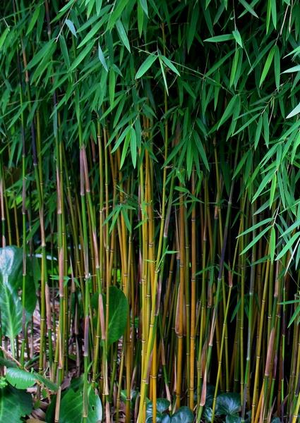 Best Bamboo Choice