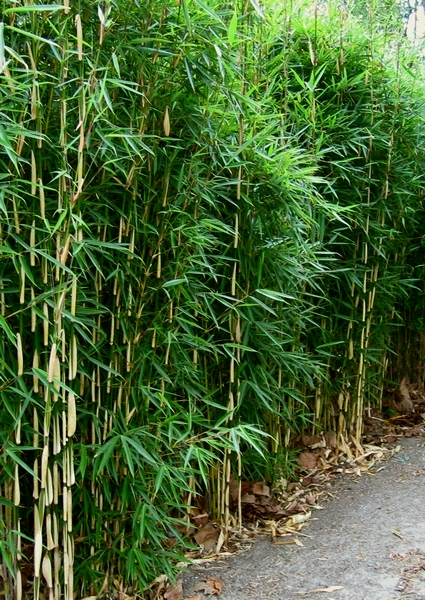 Best Bamboo Choice