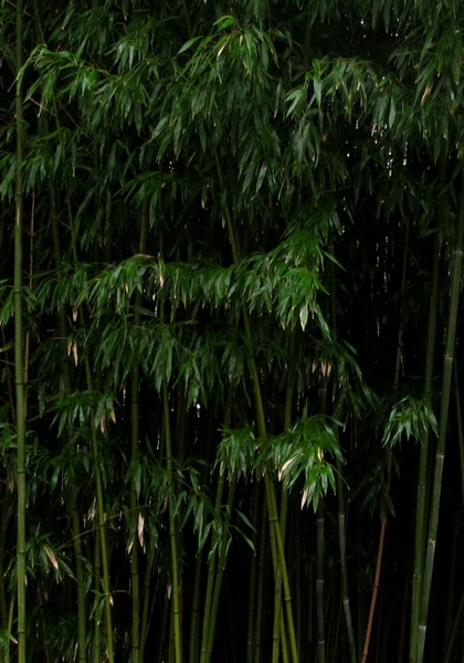 Die Beste Wahl Bambus