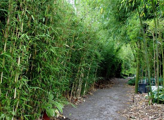 bambus katalog. Black Bedroom Furniture Sets. Home Design Ideas