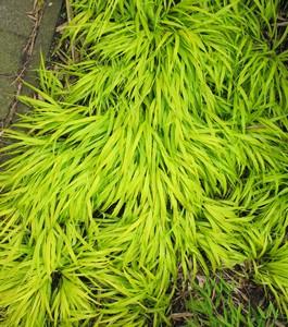 Planten die groen blijven in de winter