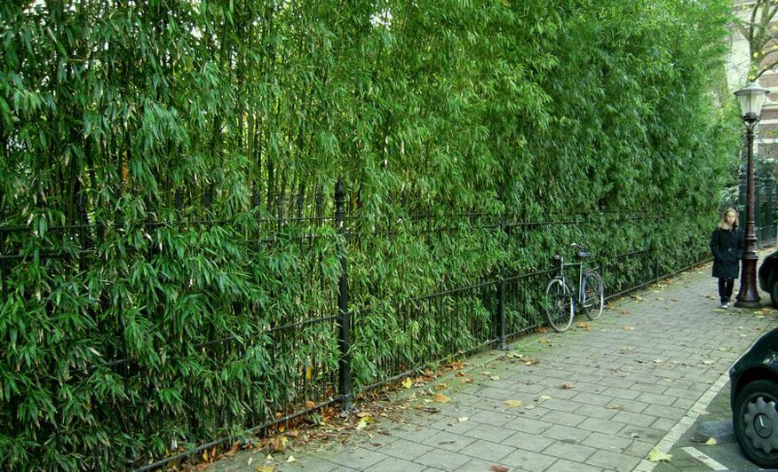 bamboe hagen bamboekwekerij kimmei valkenswaard. Black Bedroom Furniture Sets. Home Design Ideas