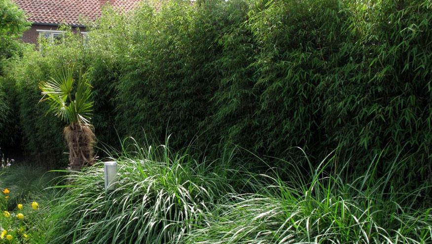 Haie Bambou - Nantes (44) - Jardin 200 m² - Lesbambous.fr forum des ...