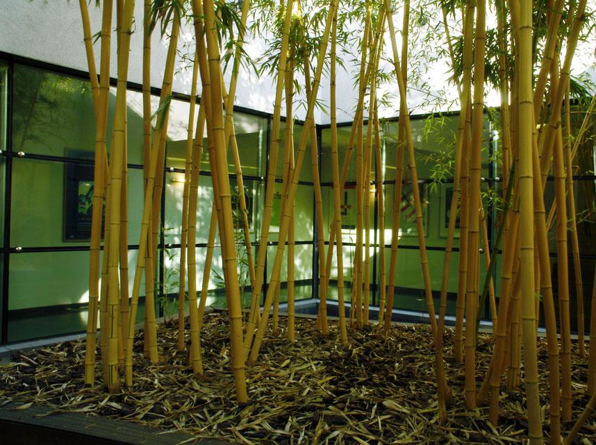 fein pflanzk bel bambus bilder die besten wohnideen. Black Bedroom Furniture Sets. Home Design Ideas